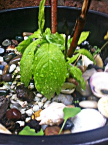 rainforblog